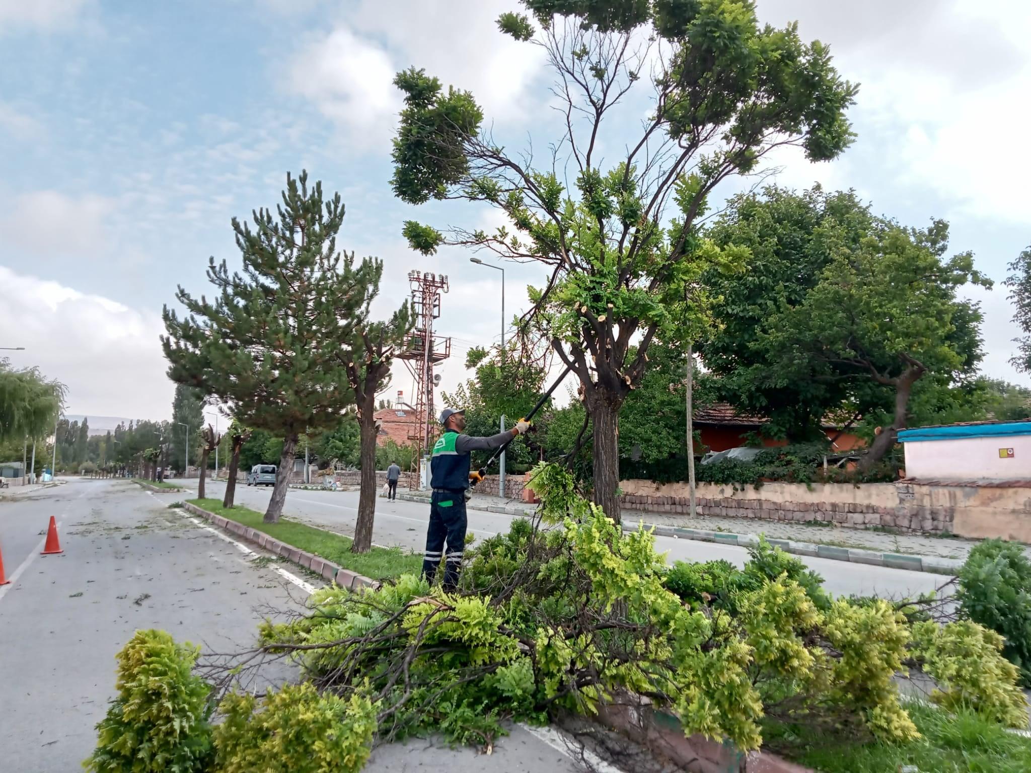 Sümer Mahallesi İnönü Caddesinde bulunan orta refüjdeki ağaçların budaması yapılıyor.